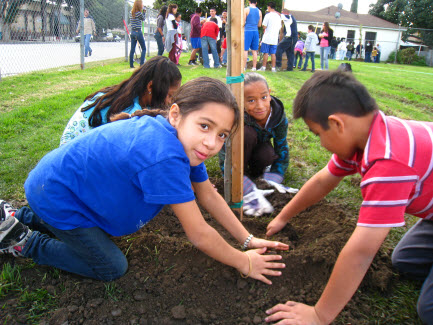 volunteers-planting-trees