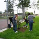 Amigos de los Rios Volunteers planting trees