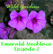 Wild Gardens Logo-Episode2