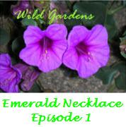 Wild Gardens Logo